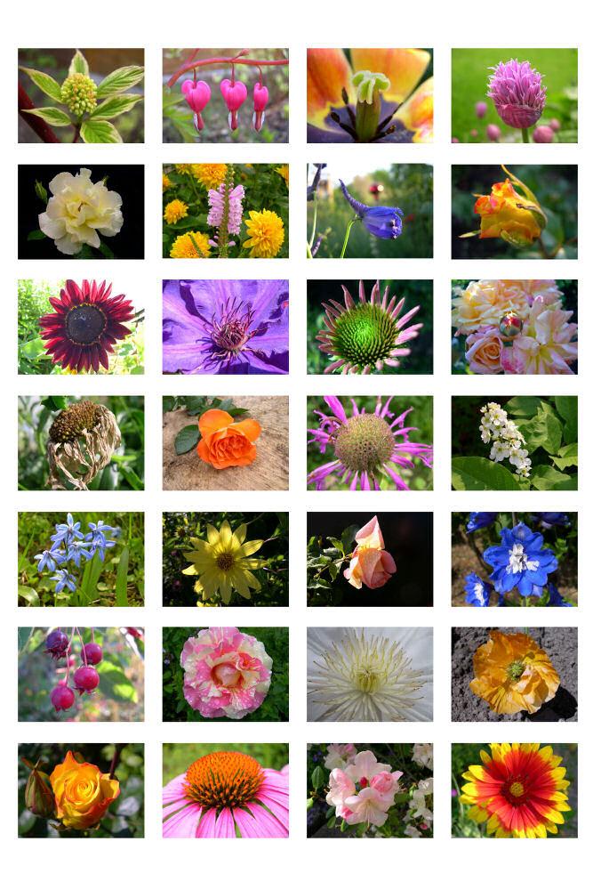 Blumentöpfe pflanzen blumenständer pflanzen ansichten 117 pflanzen